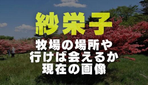 紗栄子の牧場は那須のどこで行けば会えるのか調査|経営の収入から最近の画像と仕事内容まで